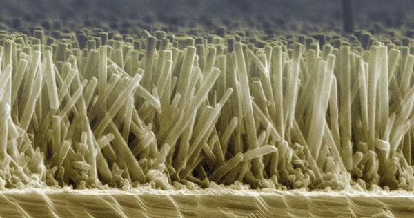 zinc oxide nanowires